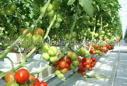 Growbags for Tomato farming