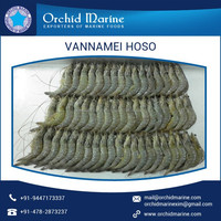 Widely Demanded Vannamei Feed Available with Full Of Nutrients for Sale