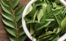 Fresh Indian Curry Leaves Best FOB Price List