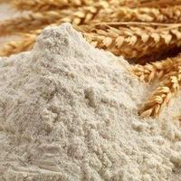 Quality Wheat flour best price