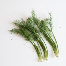 Organic Grade Fennel At Your Door Step