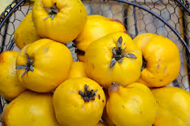 Quinces fruits