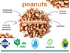 World Wide Supplier of Highly Nutritious Peanuts/ Groundnut Kernel for Bulk Purchase