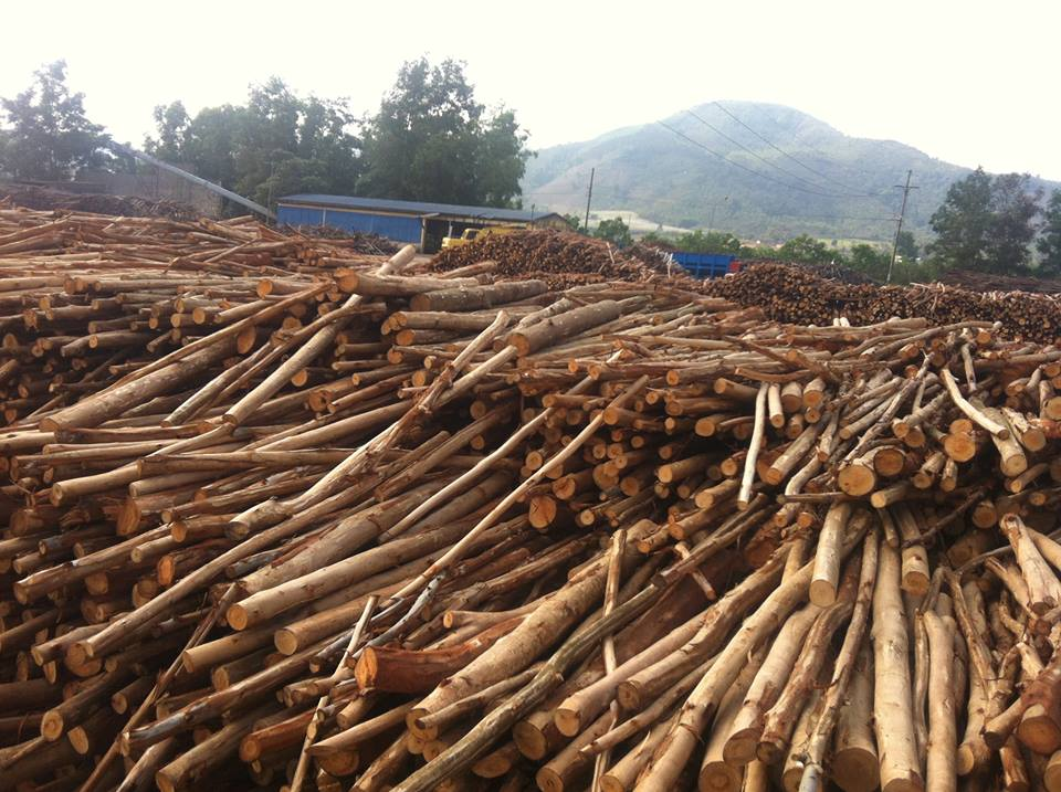 Hot Sale Marine Eucalyptus Wood For Furniture And Decorative