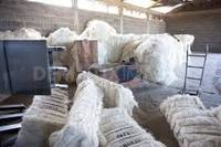 Natural raw sisal fiber price cheaper