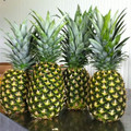 FRESH PINEAPPLE BG SIZE from viet nam