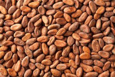 Grade A Dried Raw Cocoa Beans