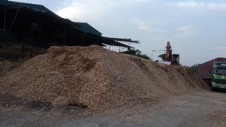 ACACIA WOODCHIPS FOR SALE