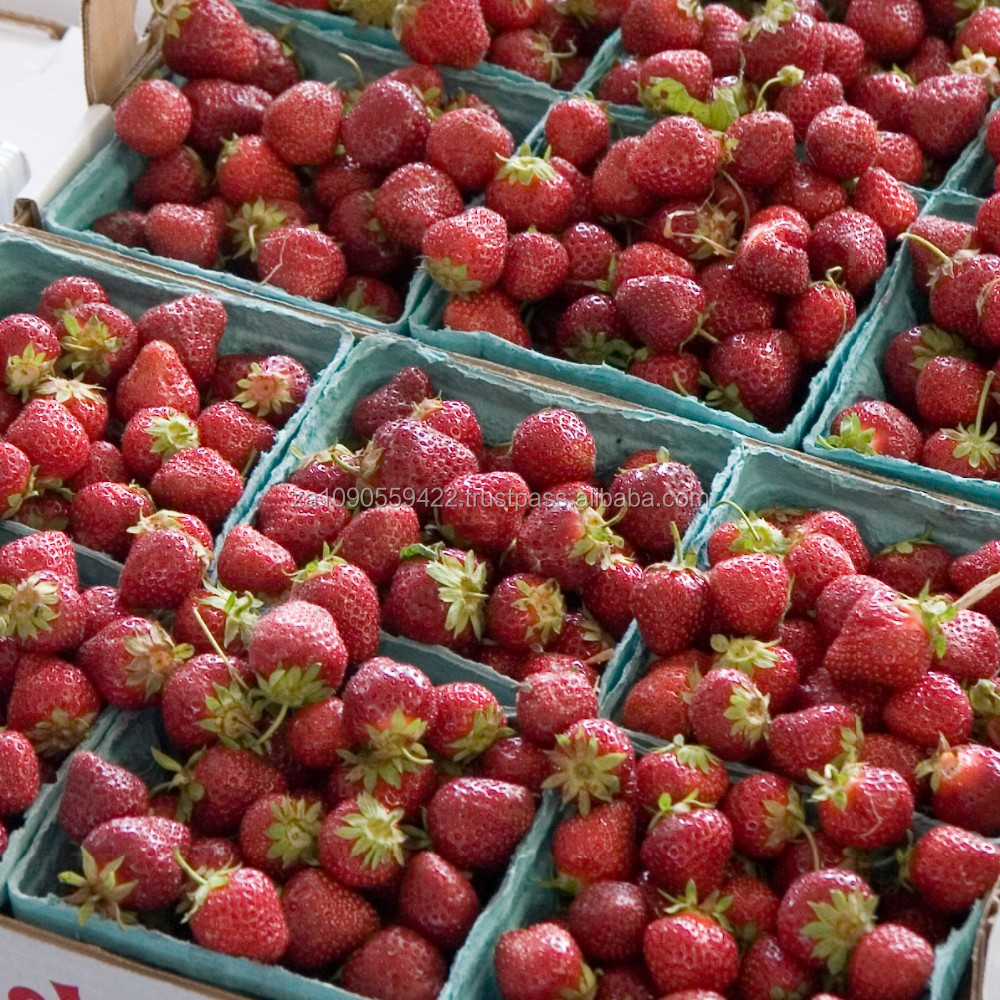Grade A Fresh Strawberries, Raspberries, Elderberries, Cranberries, Blueberries, Blackberries, Blackcurrant, Redcurrant