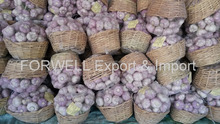 high fresh garlic specification From Egypt
