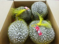 durian, mangosteen, zalacca and rambutan - NATURAL 100% - COMPETITIVE PRICE