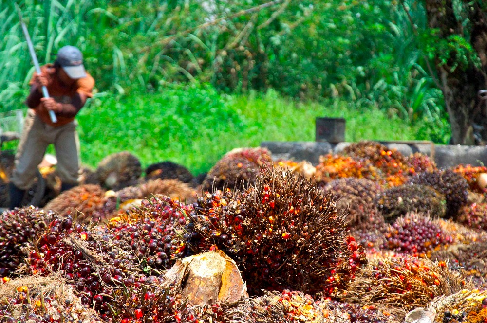 Refined Quality Crude and Palm Oil