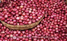 fresh small onion prices in india