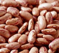 Dry Pinto Beans from natural planting