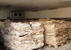 Quality Wet Salted Pig Skin For sale