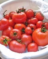 RED FRESH TOMATOES READY FOR SALE