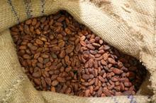 Top Quality West African Roasted Cocoa Beans