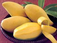 pakistani mangoes mango peru , mango fruit export from india