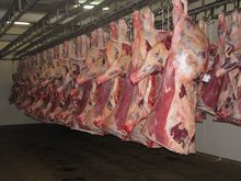Fresh Frozen Beef Meat ,Frozen Beef / Buffalo Meat and Offals