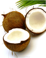 FRESH YOUNG COCONUT , HIGH QUALITY WHOLE YOUNG FRESH COCONUT