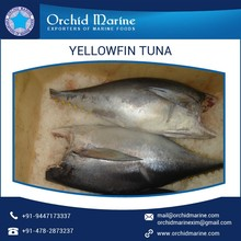 Best Quality Fresh Frozen Yellowfin Tuna for Wholesale Buyer