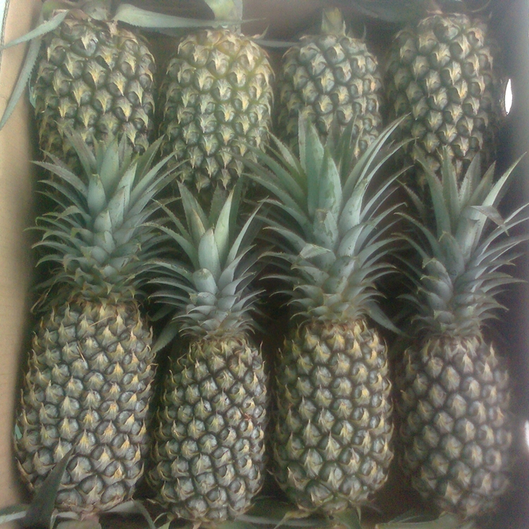 FRESH QUEEN PINEAPPLE WHOLESALE PRICE EXPORT