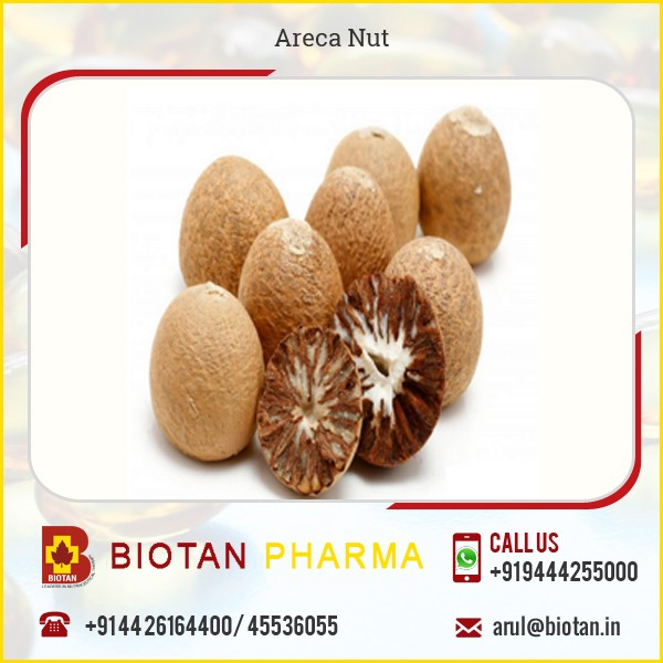 Certified Food Grade Dried Betel Nut Available from Best Industry Manufacturer