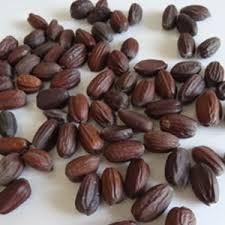 Extract of jojoba seed