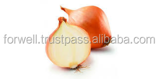 avalible now onion with high quality and competitive price