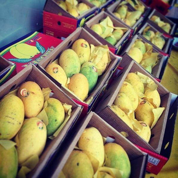 Mango From Top certified orchards of Pakistan For GCC