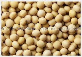 Soyabean for Animal Feed Grade A Forsale At a Low Rate