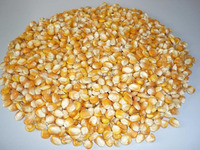 Bulk Dried Yellow Corn at low prices