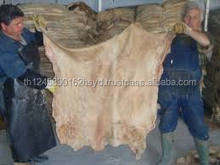 Wet Salted Donkey Hides -well processed In Kenya