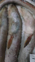 Frozen conger eel Fish /EEL Fish Fillets