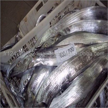 Frozen Spanish Mackerel/ KingfishFish forsale at low rate