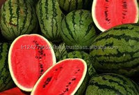 Fresh Water Melon for Sales