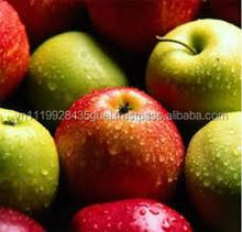 H_organic fresh green red cheapest price apple from Vietnam