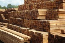 Acacia Log sawn timber