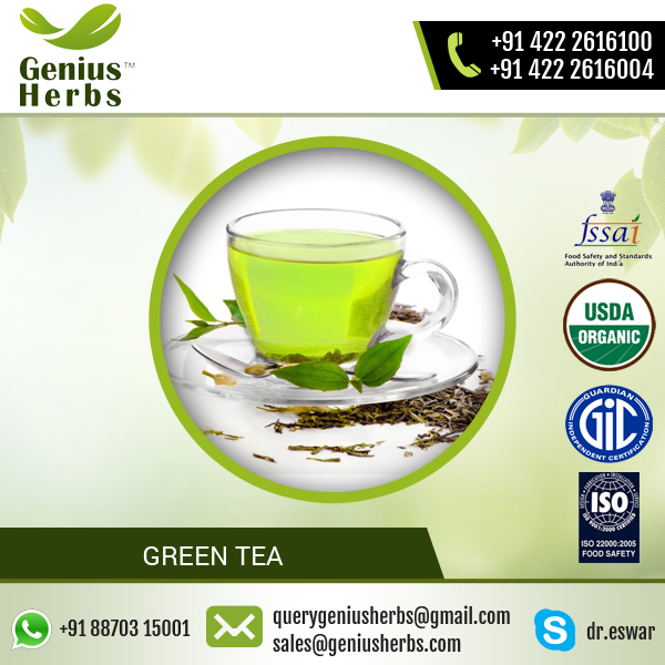 Most Popular Branded Herbal Product Green Tea at Factory Price