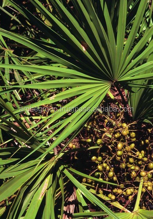 Saw Palmetto oil 90% Fatty Acid
