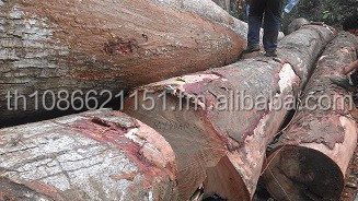 offer for AZOBE, EKKI Lophira Alata LOGS or TIMBER - LUMBER - BOARDS Timber sawn logs african hardwoods in Cameroon