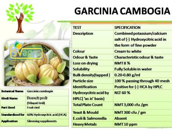 Garcinia Cambogia Powder Extract : 60% (-)-Hydroxycitric Acid : Weight loss, Antibacterial, Relieving inflammation