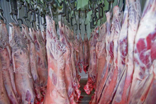 FROZEN HALAL BEEF MEAT CUTS