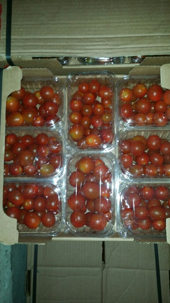 fresh egyptian cherry tomato high quality A