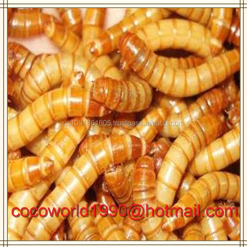 dried mealworms insects for sale