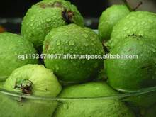 Pink ,White Guava Export in India