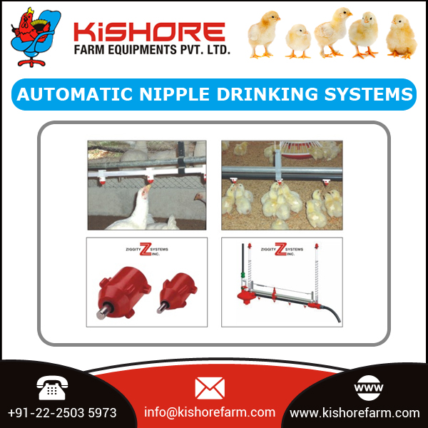 Most Popular Poultry Farm Automatic Drinking System for Chickens at Low Price
