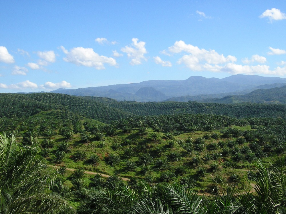 Palm Oil Land