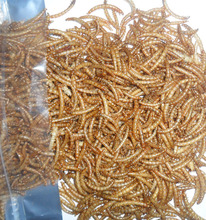 high protein bird food dried superworm Bird or mouse for KOI TASTIC feed