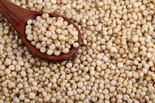Best Quality Sorghum